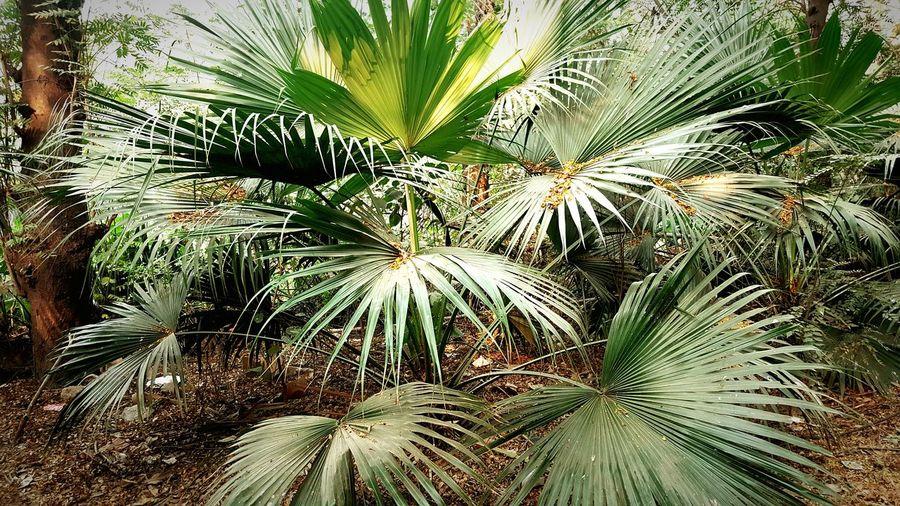 Palm Tree EyeEm Best Shots EyeEm Gallery EyeEm Natueyeeyeeyey