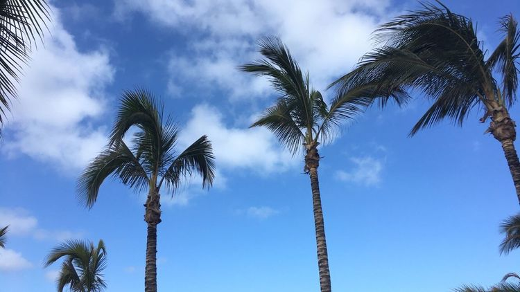 Palm Tree Low Angle View Tree Tree Trunk Sky Palm Frond Nature Cloud - Sky Beauty In Nature Scenics Outdoors Blue Day Growth No People