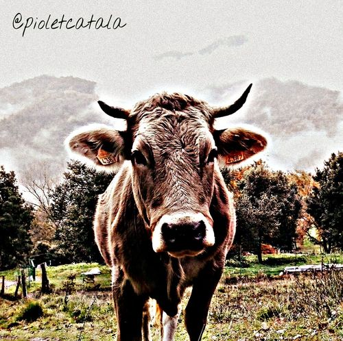 Muntanya Garrotxa Mountain Animals