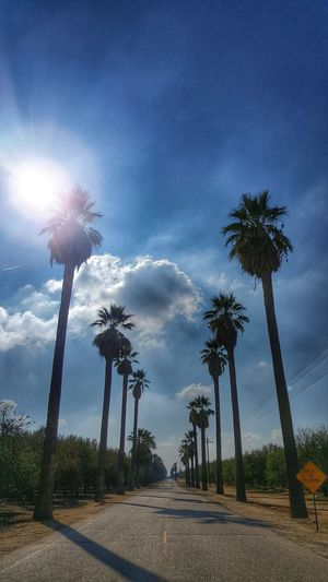 The Long Road Palm Trees Blue Sky Clouds Road Sign Blue Blue Skies Clouds And Sky Cloud - Sky Palms Distant View Exceptional Photographs Sun Sunburst Subject To Flooding Jet EyeEm Best Shots