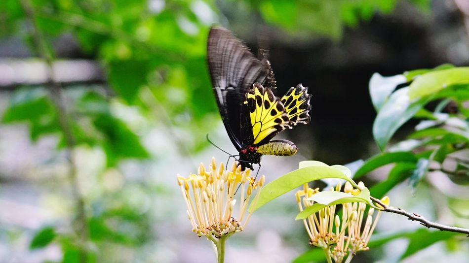 Butterfly Butterfly - Insect Insect Butterfly Collection Flower Nature No People Plant Outdoors Close-up Beauty In Nature Flower Head
