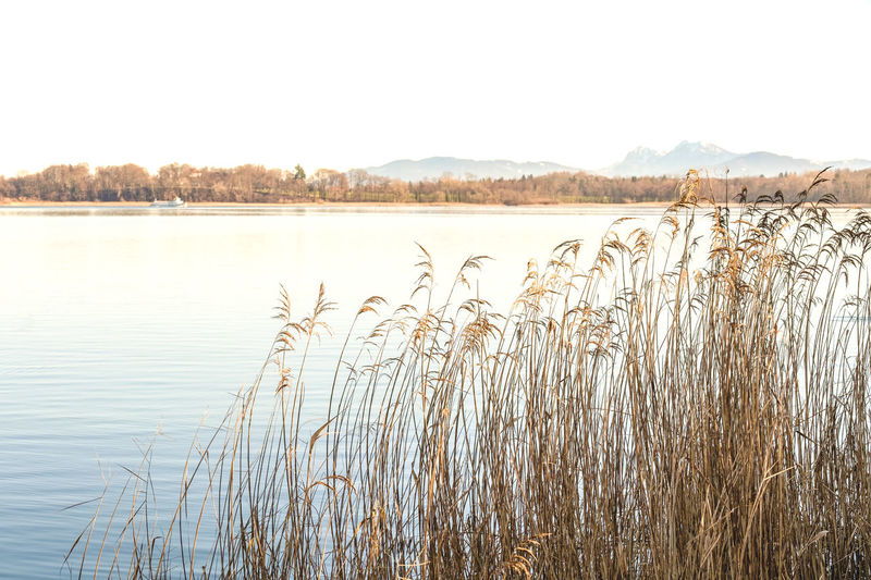 Water Tranquility Beauty In Nature Plant Sky Lake Tranquil Scene Scenics - Nature Nature No People Day Growth Grass Clear Sky Non-urban Scene Landscape Copy Space Reflection Outdoors Marram Grass Weed Waterside