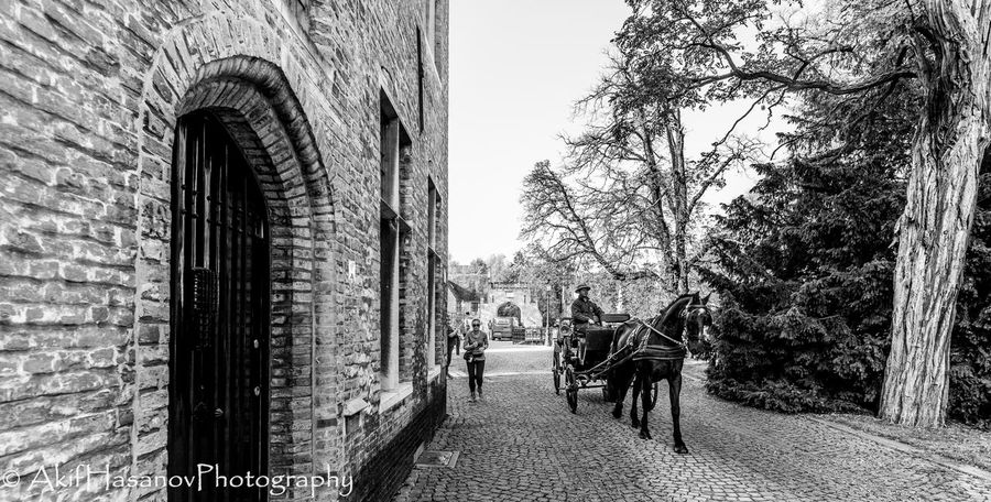 Bruges, Belgium Building Exterior Built Structure Carriage Day Domestic Animals Horse Horse Cart Tree