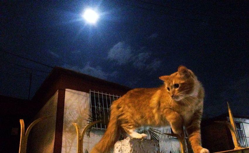 Nebu YairSoto Cat Moon