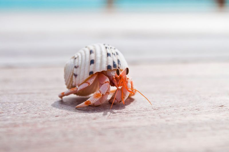 Close-up of crab in shell on beach