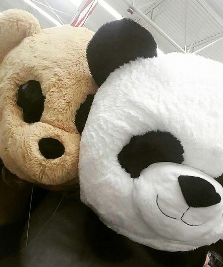 Animal Themes Animal Head  Fun Being Silly Stuffed Toy Friends Animal Mask Silly Face Panda Teddy Bear Panda - Animal Close-up