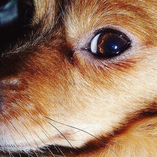 Dog #dog #puppy #pup #TagsForLikes #cute #eyes #instagood #dogs_of_instagram #pet #pets #animal #animals #petstagram #petsagram #dogsitting #photooftheday #dogsofinstagram #ilovemydog #instagramdogs #nature #dogstagram #dogoftheday #lovedogs #lovepuppies