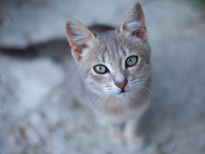 Close-up portrait of kitten sitting on road