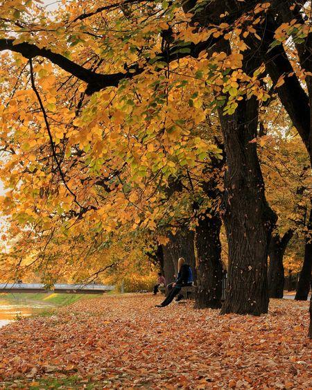 Fallen Leaves Autumn Nature Tree Outdoors Leaf Beauty In Nature Fall Foliage Fall Colors
