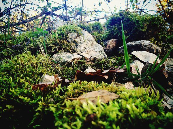 Muschio Moss Green Pietre Foglie Stones Leaves Nature
