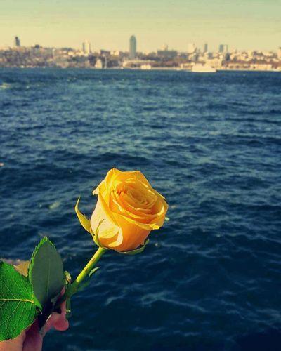 Enjoy The New Normal Flowers Yallow Flower Sea 🌊 Sky Happy Time Yalow🌻 Relaxing Uskudar Capture Berlin