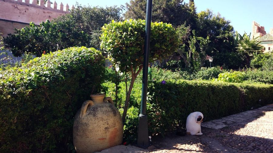 Potted plants in a garden