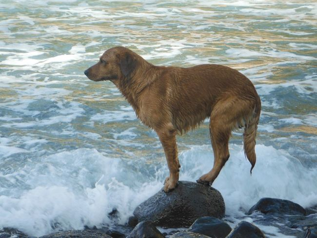 Water One Animal Splashing Motion Wet Nature Flowing Water Ocean Stones Animal Themes No People Silly Dogs Dogs Mammal River Outdoors Wave Day Waterfall EyeEmNewHere