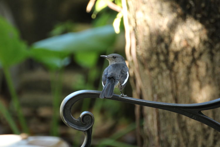 Random bird playing at my brench:) Animal Themes Animal Vertebrate Animal Wildlife Animals In The Wild Bird Focus On Foreground One Animal Perching Tree No People Day Plant Metal Nature Outdoors Branch Close-up Full Length Railing