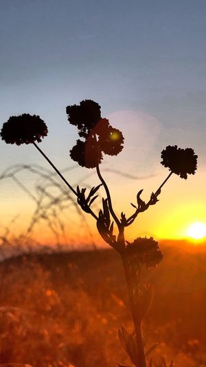 Sky Plant Sunset Tree Beauty In Nature Growth Nature Landscape Outdoors Close-up Tranquility Environment Branch