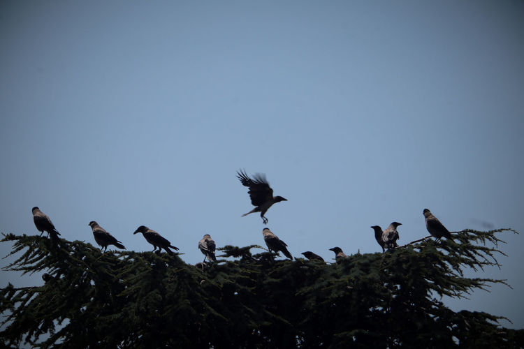 Low angle view of birds perching on a tree