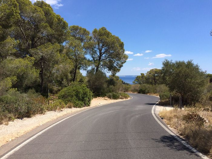 Mallorca Mediterranean  Mediterranean Sea SPAIN Travel Trip Asphalt Curve Diminishing Perspective Growth Journey Landscape Nature No People Outdoors Road Summer The Way Forward Travel Destinations Tree Summer Road Tripping Holiday Moments