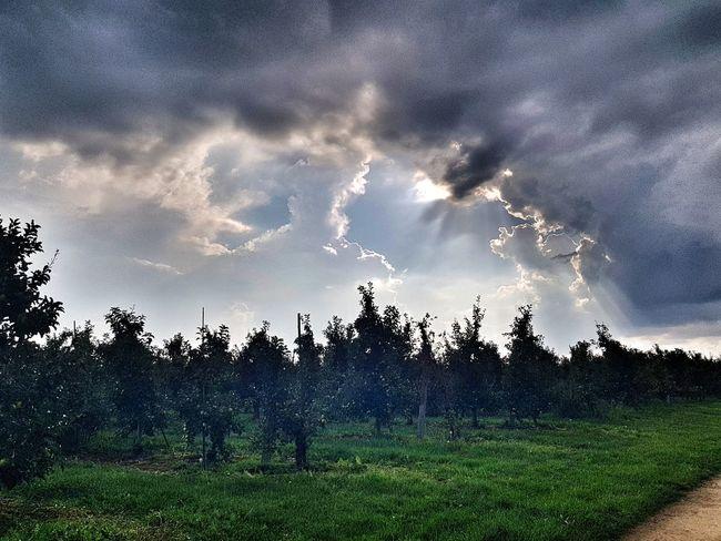sky Tree Rural Scene Storm Cloud Agriculture Sky Cloud - Sky Landscape