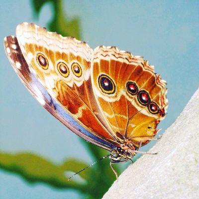 Blijdorp Rotterdam Butterfly ❤ Vlinder