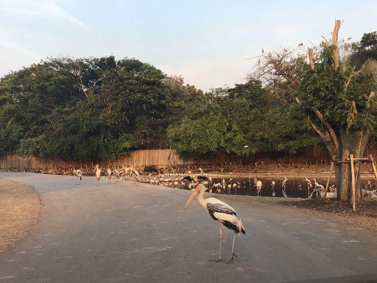 Bird Zoology Zoo Animals  Animal Safari Freedom Standing Standing Alone Alone