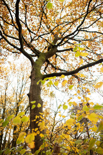Tree Plant Branch Autumn Beauty In Nature Growth Low Angle View Nature Day Flowering Plant Flower Tree Trunk Trunk Tranquility Change Springtime Leaf Outdoors Plant Part Blossom No People Tree Canopy