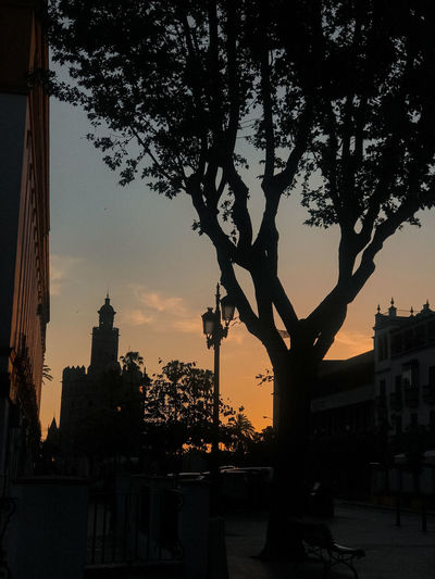 Silhouette of trees and buildings at sunset