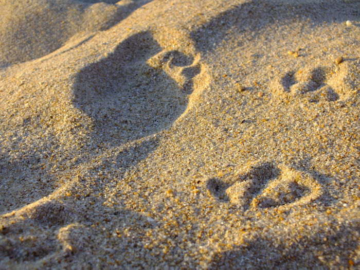 Close-Up Of Footprints On Sand