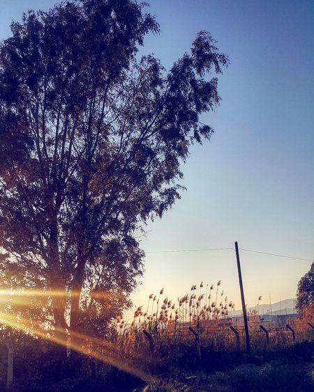 Silhouette Sky Sunset Nature No People Outdoors Water Close-up Day Beauty In Nature Tree Pixelated Turkey تركيا EyeEmNewHere Freshness Milas Turkey Art Is Everywhere Resist EyeEmNewHere Türkiye Türkei ComeToSeeTurkey Muğla,Türkiye Low Angle View