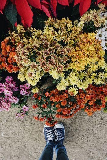 Bloom baby,