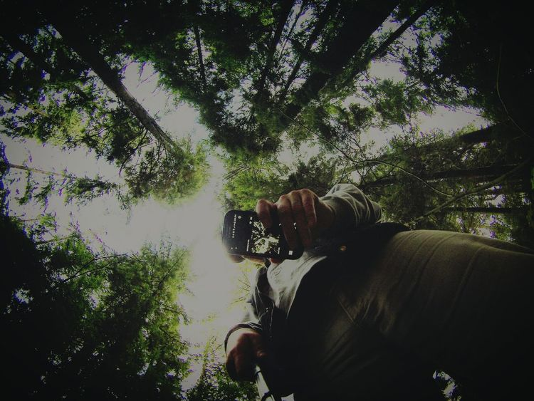 Forest Perspective Trees British Columbia Buntzen Lake Forest Photography Belcarra Inception Self Shot
