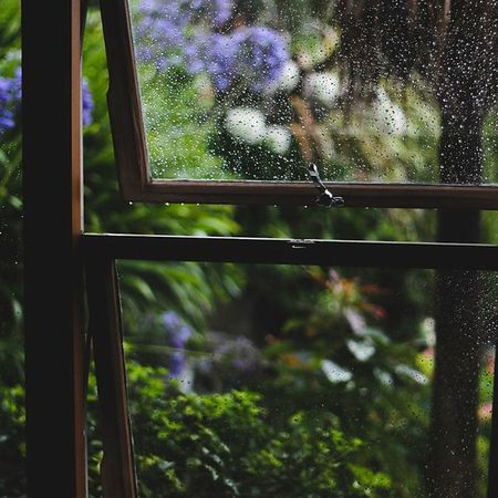 Window Tree No People Day Close-up Indoors  Nature Rainy Day Rainy Season Window View Green Nature Green Color Old House Exotic Travelling Travel Photography Beauty In Nature Romantizm