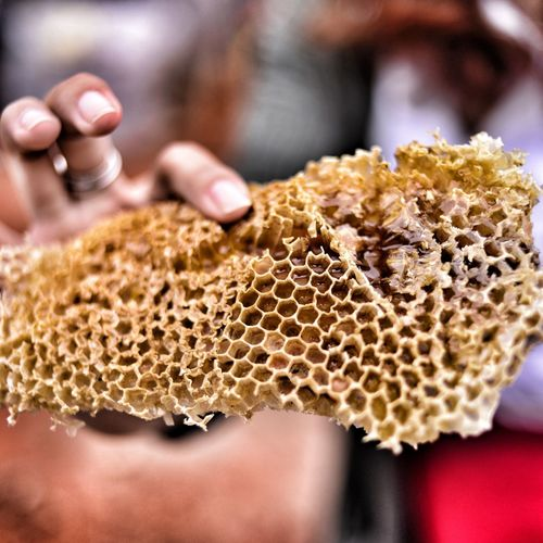 Close-Up Of Woman Holding Honeycomb