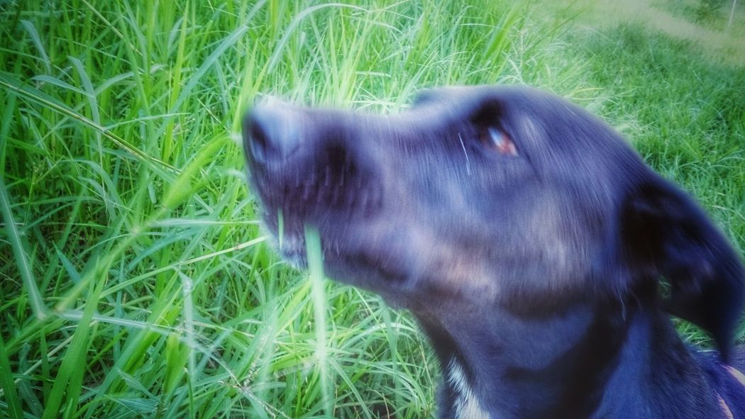 Capturing Movement Movement Photography Dog Black Dog Hanna My Pet Photo Eating Grass She Love Lovely Girl Cute That's My Dog