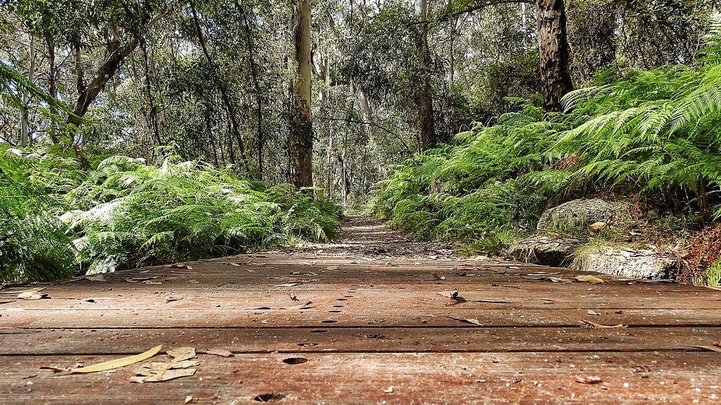 A path to Adventure Australia