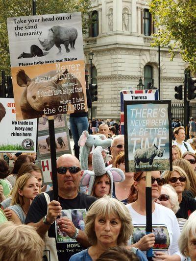 Global March Fro Elephants And Rhinos, London, U.K., 24/09/2016 Global March For Elephants And Rhinos Stevesevilempire Steve Merrick Olympus Protect Elephants Elephants News Zuiko Protest London