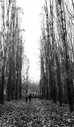 Blackandwhite Hightrees Walk Daddyandson Tree Plant Forest Land Nature Real People Day Tranquility Leisure Activity Walking Men Outdoors Pets