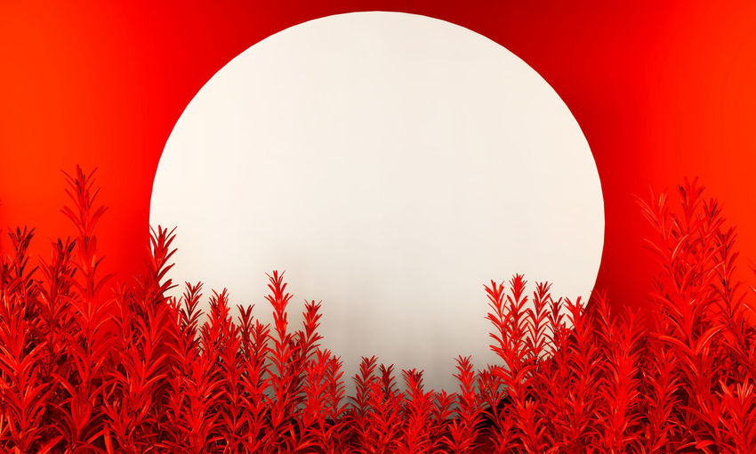 Close-up of red plants against clear sky