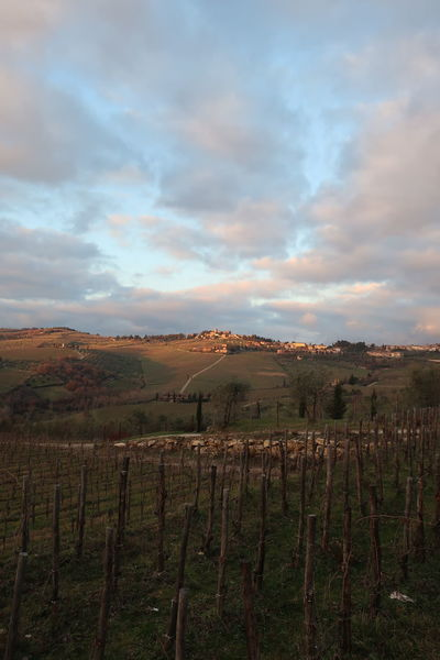 Chianti Country Landscape Tranquil Scene Tranquility Vinyards Vinyardsunset