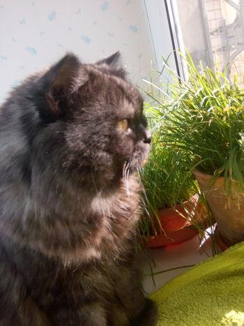Кот Тима Looking Away Fresh On The EyeEm Fresh On Eyeem  Cat Looking At Camera Fresh On Eyeem  At Home Yellow Eyes High Angle View