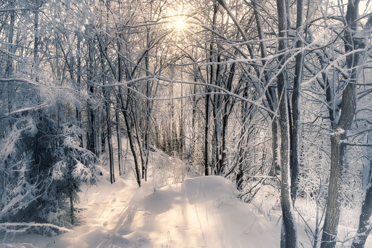 Scenic winter landscape with nice sunlight in Finland Atmospheric Mood Beauty In Nature Cold Temperature Day Forest Forest Path Landscape Light And Shadow Nature No People Outdoors Rays Scenics Snow Snowy Sunlight Sunrise Sunset Tranquil Scene Tranquility Tree Trees Weather Winter Wintry