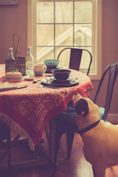 Country Living Farmhouse Table Setting Animal Themes Chair Day Dog Domestic Animals Home Interior Home Showcase Interior Indoors  Mammal Mixed Colors No People One Animal Pets Table Tablecloth Window