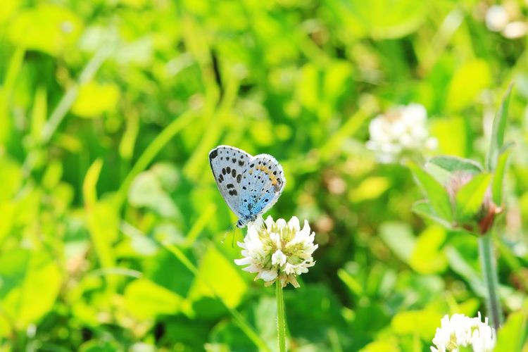 White Flower Flower Butterfly - Insect Butterfly Copy Space Backgrounds Japan Flower Flowering Plant Plant Fragility Beauty In Nature Vulnerability  Insect Growth Animal Wildlife Freshness Invertebrate Close-up One Animal Animals In The Wild Animal Themes Animal Animal Wing Nature Flower Head Petal