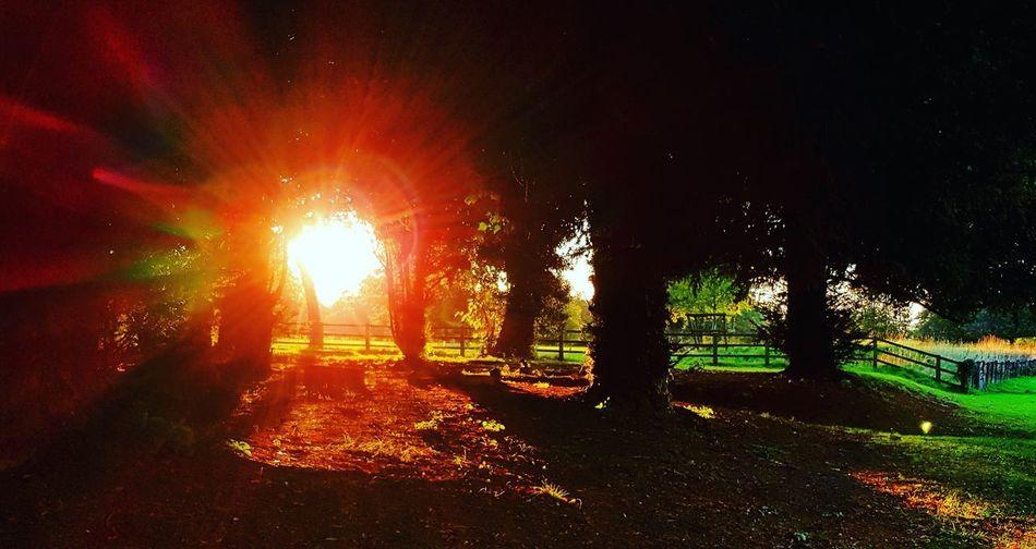 Sun Sunset Autumn Tree Sky