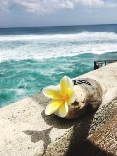 Sea Flower Frangipani Flower Waves