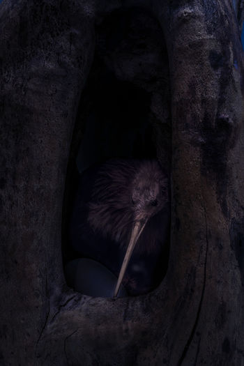 Close-Up Of Bird In Tree Hollow At Night