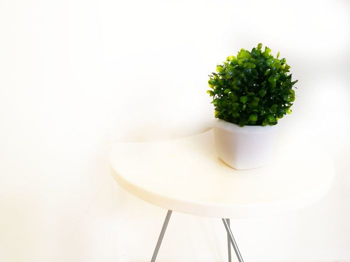 No People Plant Indoors  Close-up Artificial Plant Vase Vase Decoration Leaves Decor Decoration White Background Tree Nature Day Home House Space Side Table Accesories Alone Green