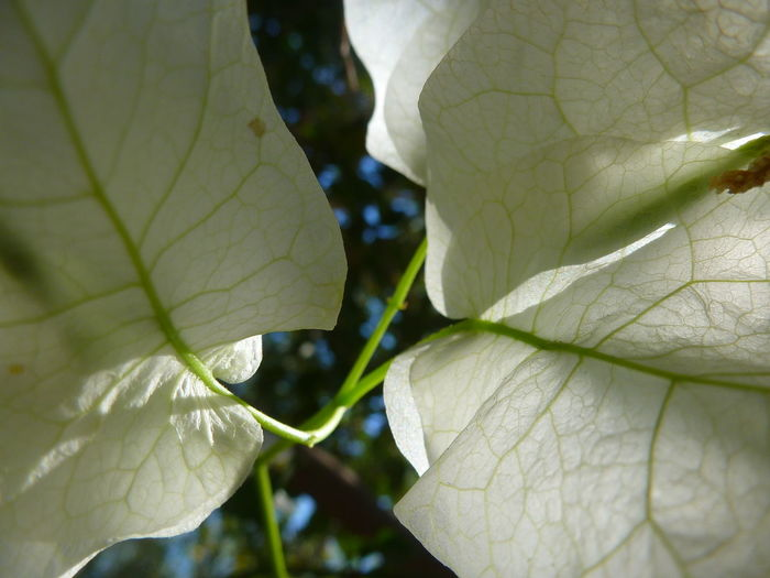 Detail shot of leaves