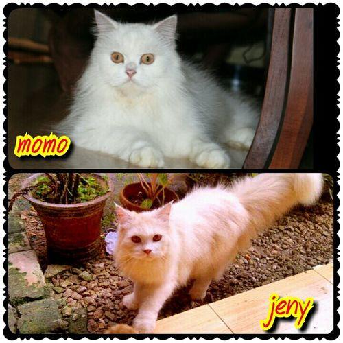 momo & jeny