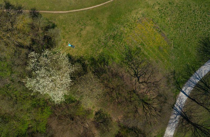 High angle view of animal on land