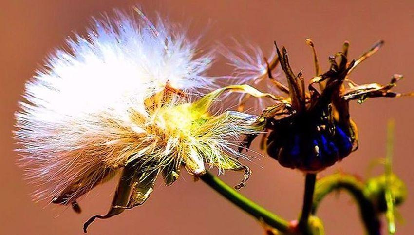"Can I title this ""Bad hair day"" ? =) Autumn is here, I see bunch of fallen flower left and right, different kind of beauty. The art of Lovelydeadcrap 2) SuperHubs_Max 3) Splendid_dof 4) Superb_flowers 5) Princely_shotz 6) Macro_perfection 7) 9vaga_autumnmood9 8) Flowersandmacro 9) Pocket_family 0) Rsa_nature 1) Rsa_macro 2) Pocket_dof 3) Igglobalclubmacro 4) Tv_depthoffield 5) Fotofanatics_macro_ 6) World_bestnature 7) Resourcemag 8) Macro_club 9) Macroworld_tr 0) Ig_shotz 1) Best_photogram 2) Ptk_macro 3) Macro_secrets 4) Macro_brilliance 5) Macro_holic 6) www_macro 7) jj_indetail 8) flowerstalking 9) show_us_macro 0) macro_vision"